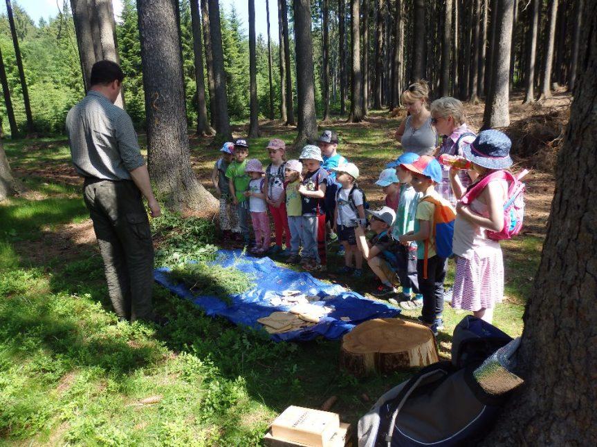 Lesní pedagogika – MŠ Žďárská