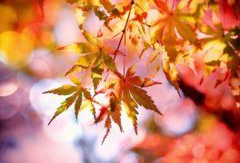 Co nás čeká v měsíci říjnu – MŠ Drobného